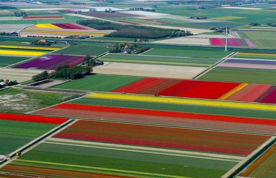 Tulip Fields by Normann Szkop